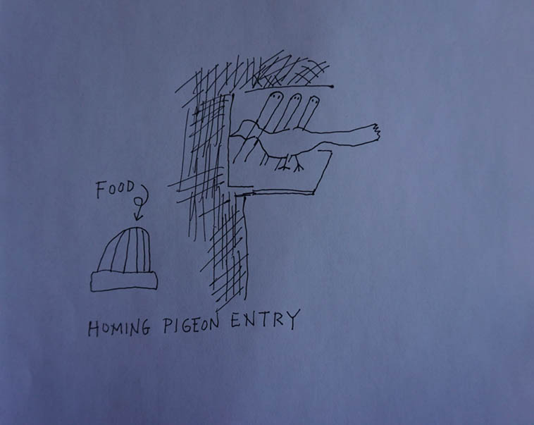 That's suppose to represent the one-way entrance that homing pigeons use to re-enter their home coop after their afternoon fly-around ---------- Line drawing my MW August 2o19