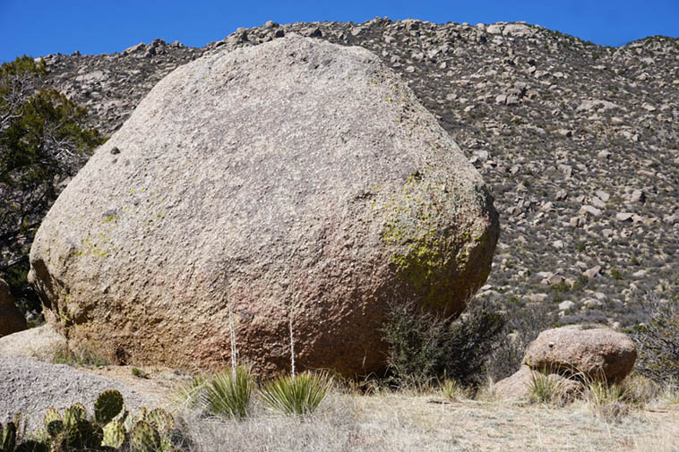 "These boulders are scattered all over the Sandia Mountains, they are a type of granite known as ""gneiss,"" a composite of quartz & mica & other sedimentary igneous rocks, somewhat crumbly ---- March 14, 2020 ---- photo by MW ---- I always think of Henry Moore or Barbara Hepworth's sculptures when I see these, and even Isamu Noguchi"