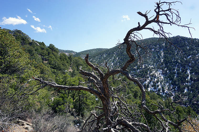 Embudito Canyon ---- March 30, 2021 ---- photo by MW
